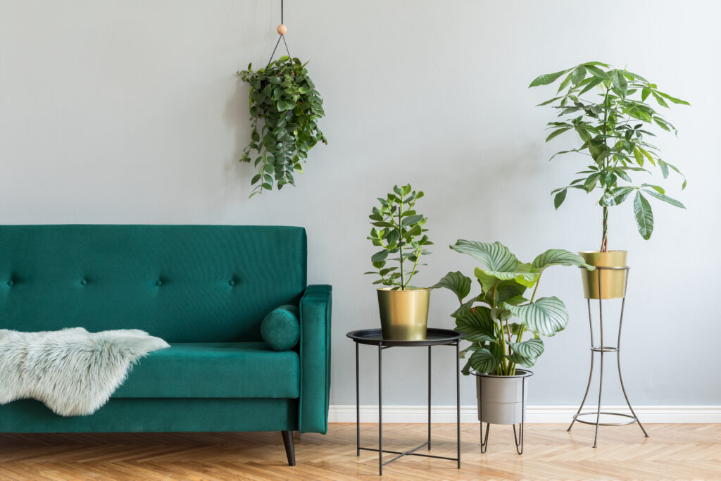 minimalistic home interior with green velvet design sofa, coffee table and a lot of plants copy space for inscription, mock up poster brown wooden parquet concept of stylish home interior garden