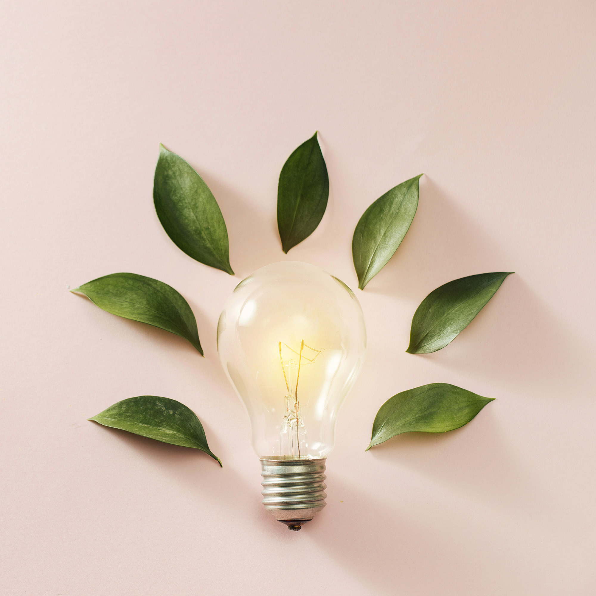 eco green energy concept bulb, lightbulb leaves on pink background